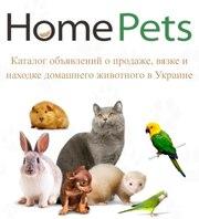 Продажа кошек. Каталог объявлений