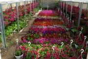 Продам цветы оптом и мелким оптом