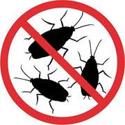 Профессиональное уничтожение насекомых и грызунов. Гарантия. Безопасно