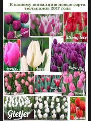 Купить тюльпаны оптом луганск заказать бесплатно каталог комнатных цветов